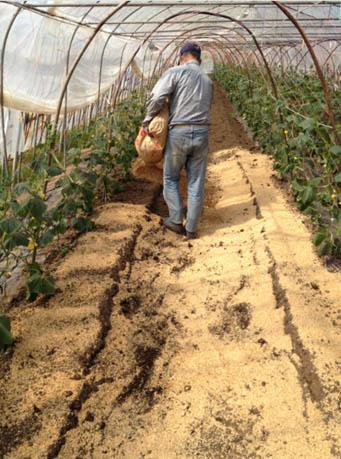 農業事業1